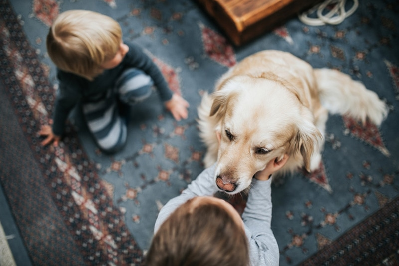 Dog and family, How Can Your HVAC Equipment Help Protect Against Coronavirus?
